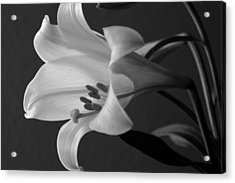 Her Name Was Lily Acrylic Print