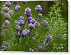 Herb Garden. Acrylic Print