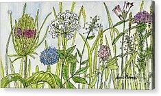 Herbs And Flowers Acrylic Print