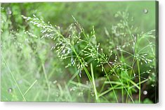 Herbs Close Up Acrylic Print
