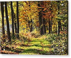 Herbsttag Acrylic Print by Olivia Narius