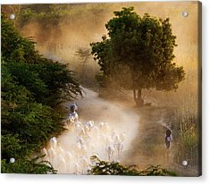 herd and farmer going home in the evening, Bagan Myanmar Acrylic Print