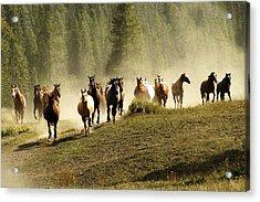 Herd Of Wild Horses Acrylic Print