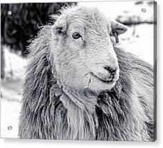 Acrylic Print featuring the photograph Herdwick Sheep by Keith Elliott