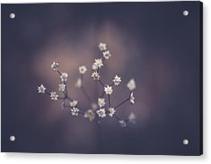 Acrylic Print featuring the photograph Here And There by Shane Holsclaw