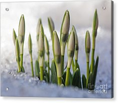 Here Comes The Spring Acrylic Print