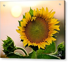 Here Comes The Sun Acrylic Print by Nick  Boren