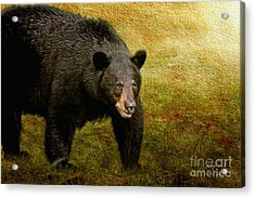 Here Comes Trouble Acrylic Print by Lois Bryan