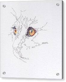 Here Kitty Kitty Acrylic Print by Kimberly Santini