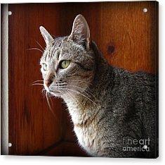 Here Kitty Kitty Acrylic Print by Mandy Shupp