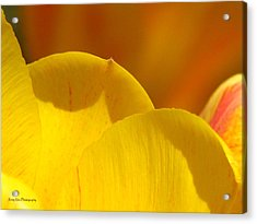 Acrylic Print featuring the photograph Here Within The Heart Of Spring by Roxy Riou