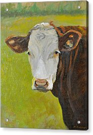 Hereford Cow Portrait Acrylic Print by Phyllis Tarlow