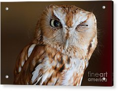 Here's Looking At You Acrylic Print by A New Focus Photography