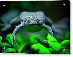 Here's Looking At You Acrylic Print by Christina Durity