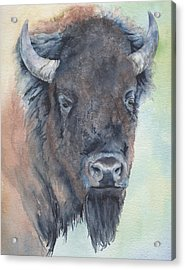 Here's Looking At You - Bison Acrylic Print