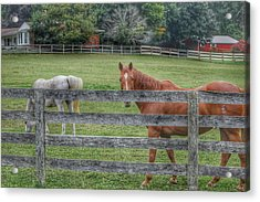 1007 - Here's Looking At You Acrylic Print