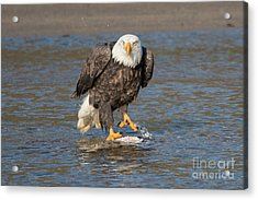 Here's Staring At You Acrylic Print