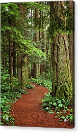 Heritage Forest 2 Acrylic Print by Randy Hall
