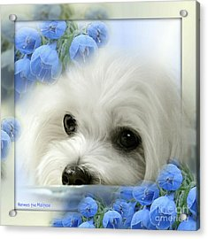 Hermes In Blue Acrylic Print