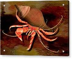 Acrylic Print featuring the painting Hermit Crab by Anne Beverley-Stamps