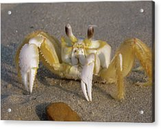 Hermit Crab Acrylic Print by JAMART Photography