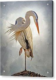 Great Blue Heron Artwork 0660 Acrylic Print