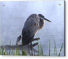Heron 5 Acrylic Print