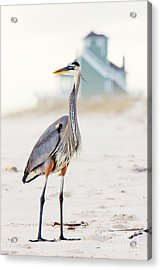 Heron And The Beach House Acrylic Print by Joan McCool