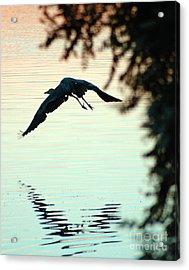 Heron At Dusk Acrylic Print