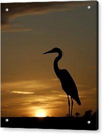 Heron At Sunset Acrylic Print