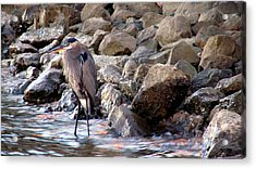 Heron At Sunset Acrylic Print by Nicole I Hamilton
