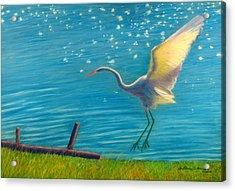 Heron Great White   Pastel   Acrylic Print by Antonia Citrino