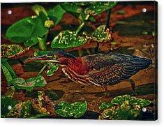 Heron Hdr Acrylic Print by Travis Burgess