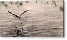 Heron In Flight Acrylic Print by Debbie Homewood