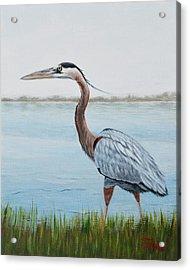 Heron In The Marsh Acrylic Print