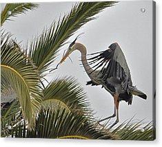 Heron In The Palm Acrylic Print by Matt MacMillan