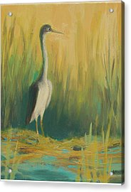 Heron In The Reeds Acrylic Print by Renee Kahn