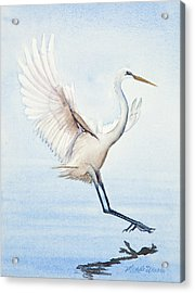 Heron Landing Watercolor Acrylic Print by Michelle Wiarda