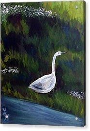 Heron Acrylic Print by Loretta Nash