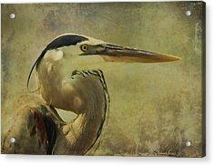 Heron On Texture Acrylic Print
