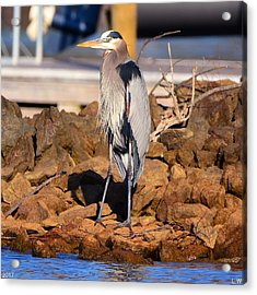 Heron On The Rocks Acrylic Print