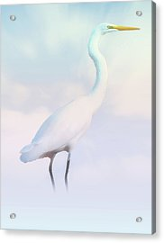 Heron Or Egret Stance Acrylic Print by Joseph Hollingsworth