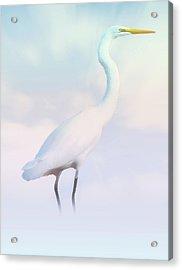 Heron Or Egret Stance Acrylic Print