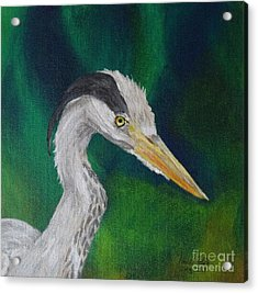 Heron Painting Acrylic Print by Isabel Proffit