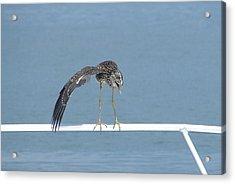 Heron Stretching Acrylic Print by Bruce W Krucke