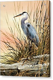 Heron Sunset Acrylic Print by James Williamson