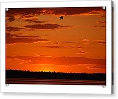 Heron Sunset Acrylic Print by J D Banks