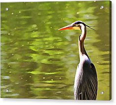 Heron Wading And Waiting Acrylic Print by Dan Sproul
