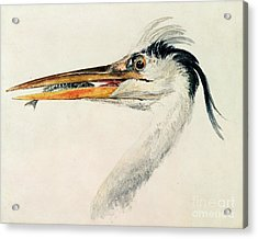 Heron With A Fish Acrylic Print by Joseph Mallord William Turner