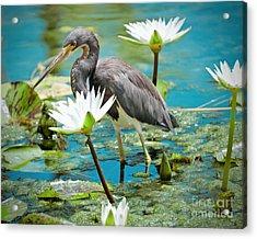Heron With Water Lillies Acrylic Print